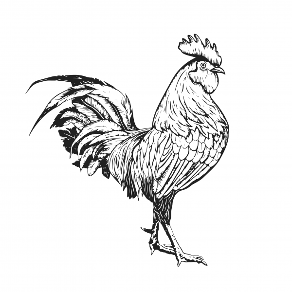 GD-Herring-Black-Rooster-2020-favicon
